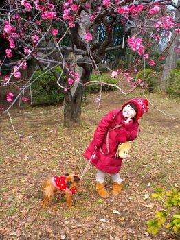 2015梅まつり4.jpg