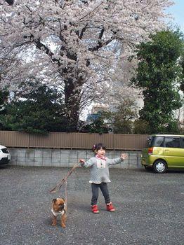 にことライカと桜と1.jpg