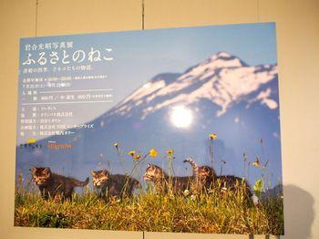 ねこ展2015ポスター1.jpg