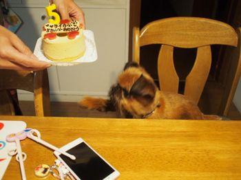 ケーキ待てないライカ2.jpg