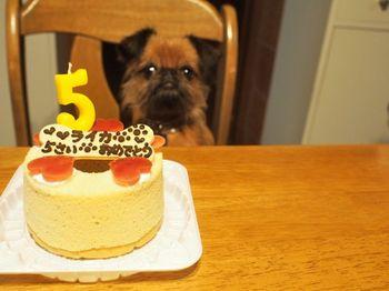 ライカ5歳ケーキ2.jpg