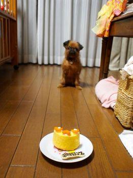 ライカ6ケーキ待て1.jpg