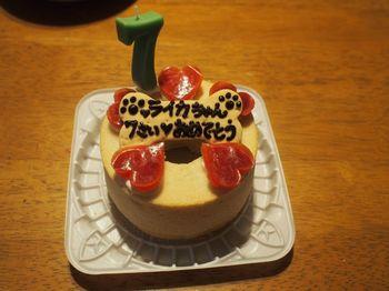 ライカ7歳ケーキ3.jpg
