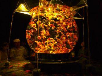 大金魚鉢1.jpg