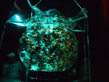 大金魚鉢2.jpg