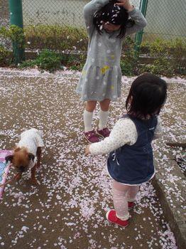 桜かぶるにこ1.jpg