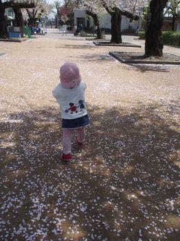 桜の中をあんちゃん1.jpg