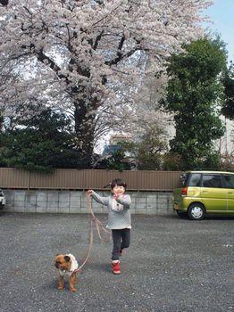 にことライカと桜と2.jpg
