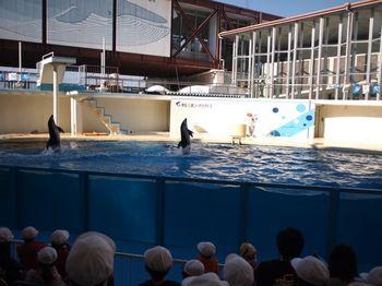 イルカ立ち泳ぎ1.jpg