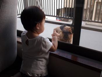 窓越しの子1.jpg.JPG