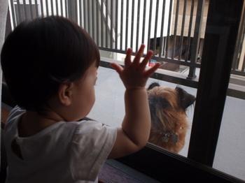 窓越しの子2.jpg.JPG
